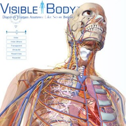 visible-body